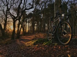 Riding hard in the forest