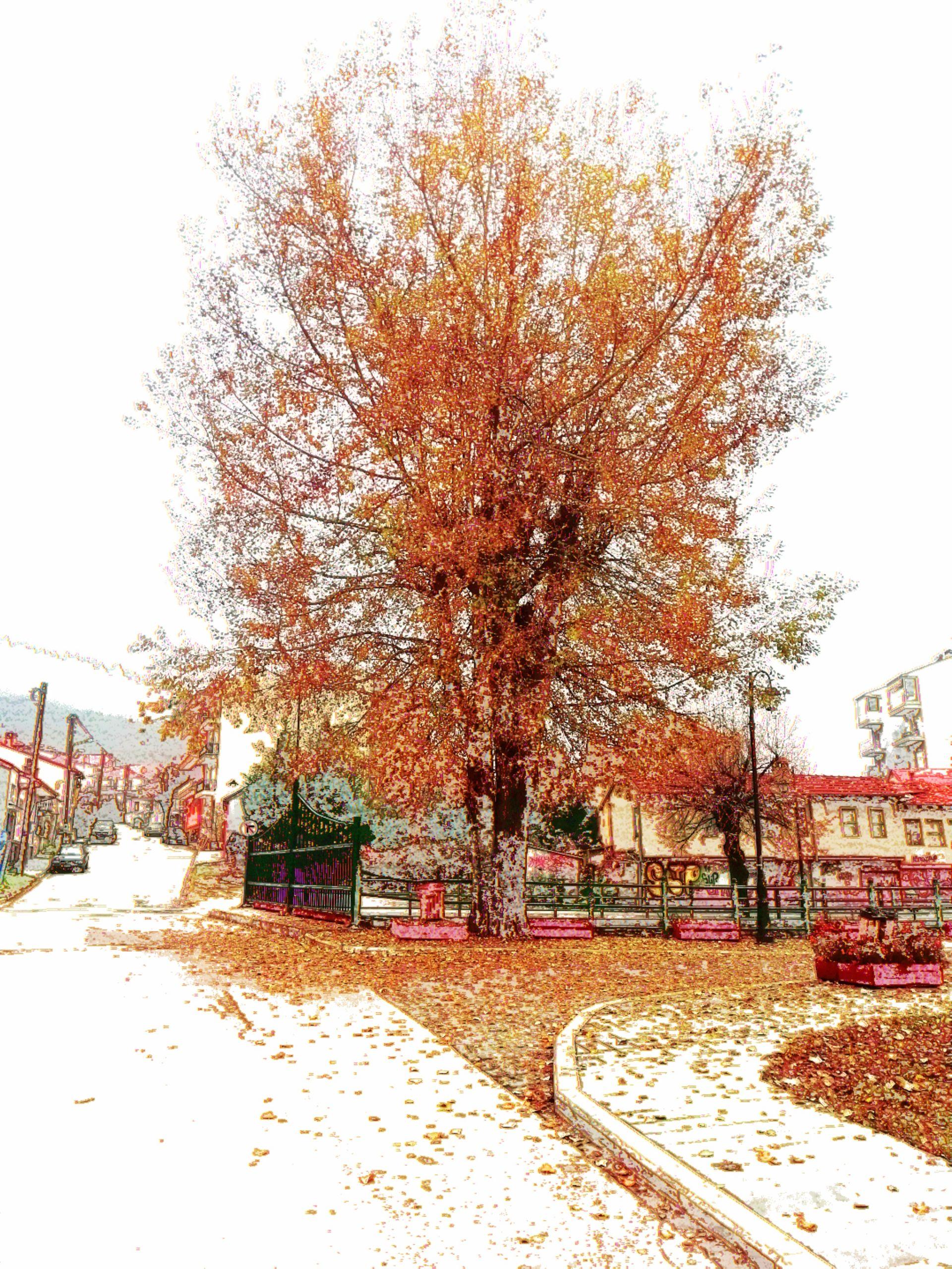 Τρέχοντας στην χειμωνιάτικη Φλώρινα…